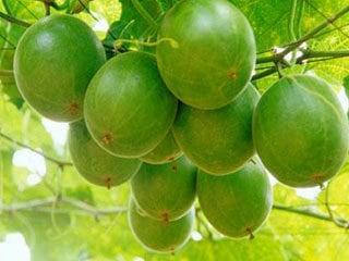 pluot fruit monk fruit extract