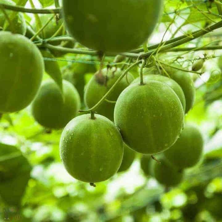 Best low carb keto sweeteners - monk fruit