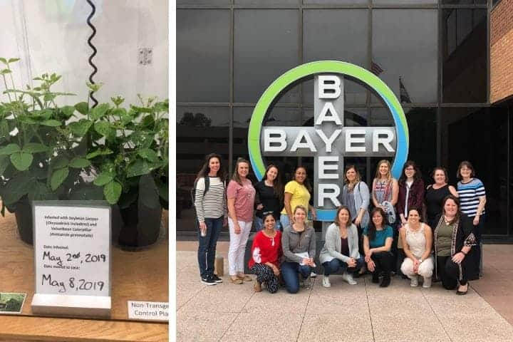 Bayer GMO tour